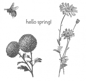 Stampin Up Springtime Hello Stamp Set