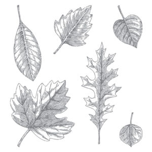 138802 Vintage Leaves - Photo