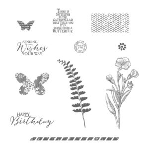 138816 Butterfly Basics - Clear